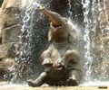 Playing in the water - animals photo