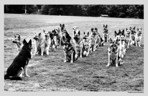 Police Anjing