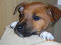 Poppy The Puppy