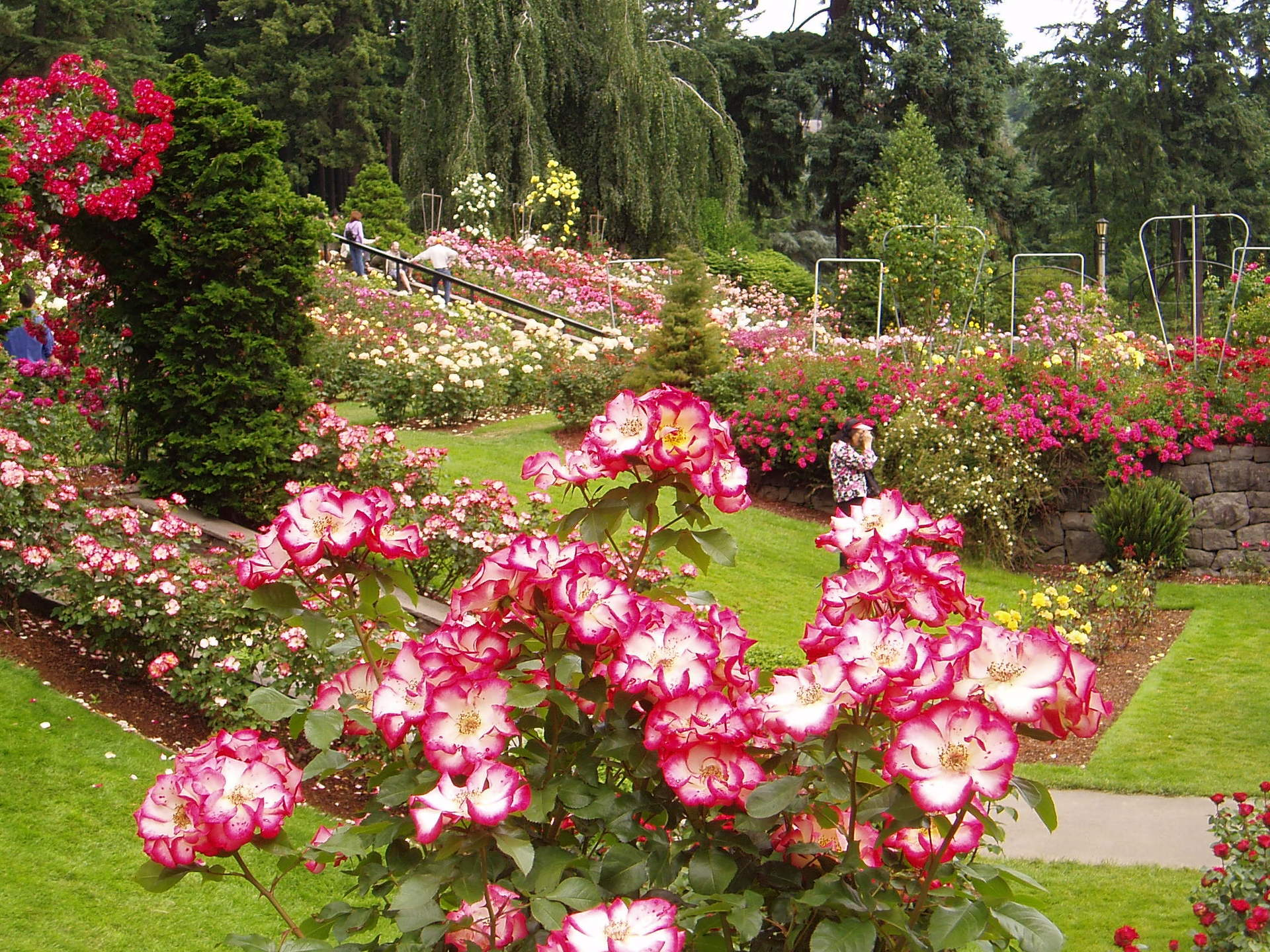 Portland images portland rose garden hd wallpaper and for Garden
