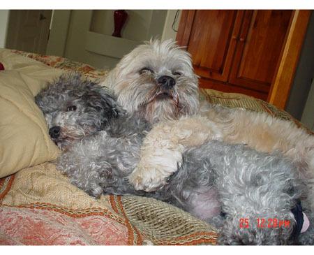 cachorro, filhote de cachorro hugs