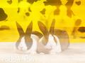 Rabbit pics/blends