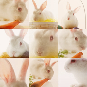 Rabbit pics/blends