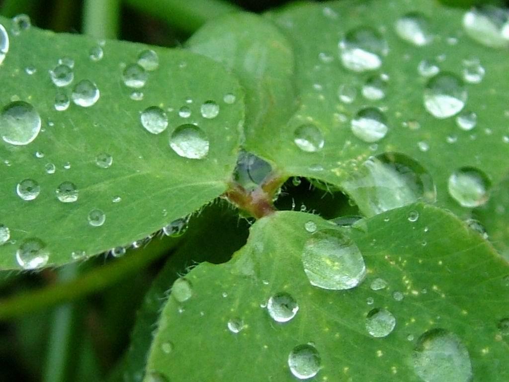 Rain  Rain Photo 789610  Fanpop