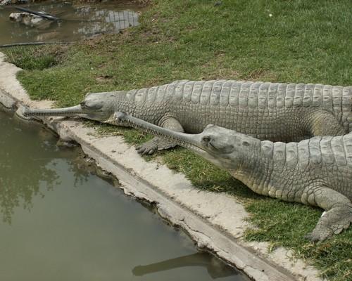 Reptile family fondo de pantalla