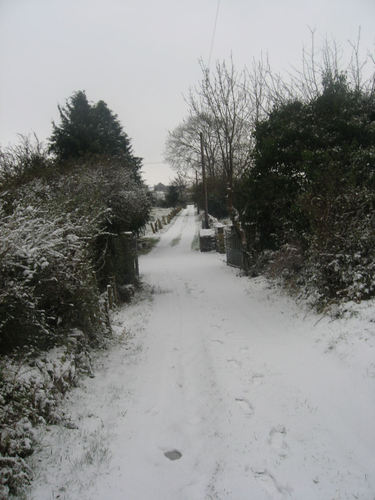 Road to my house
