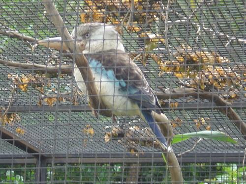 Royal Melbourne Zoo