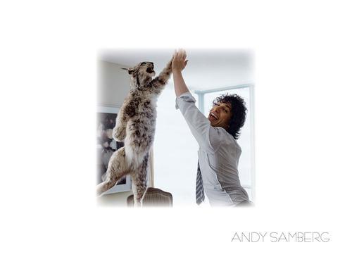 Andy Samberg wallpaper called Samberg wallpaper