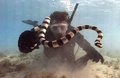 Sea snake - sea-life photo