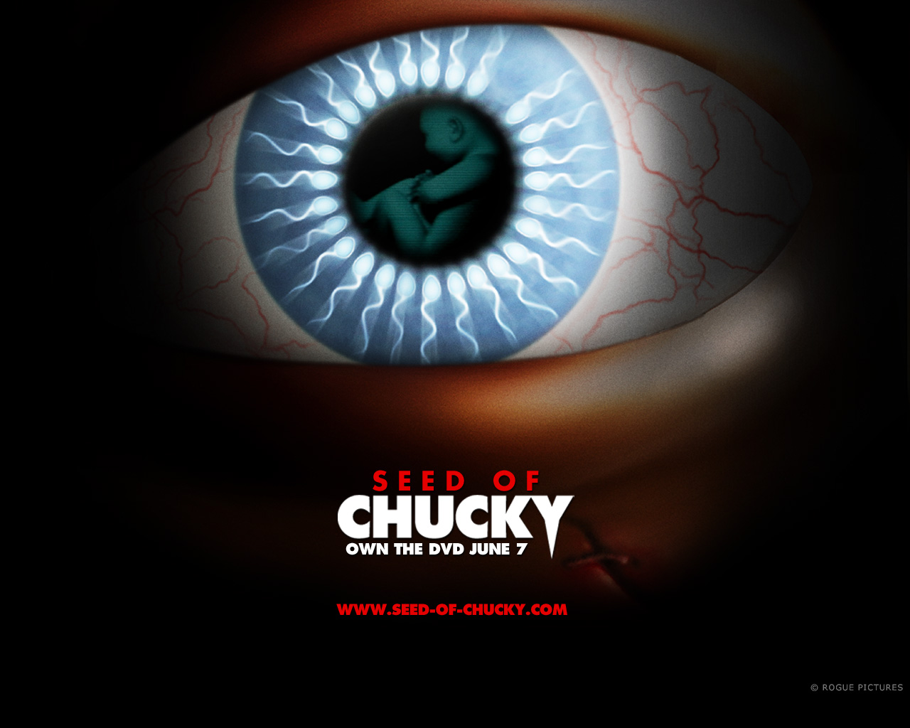 chucky images seed of chucky hd wallpaper and background