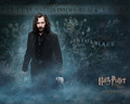 the-black-family - Sirius Wallpaper wallpaper