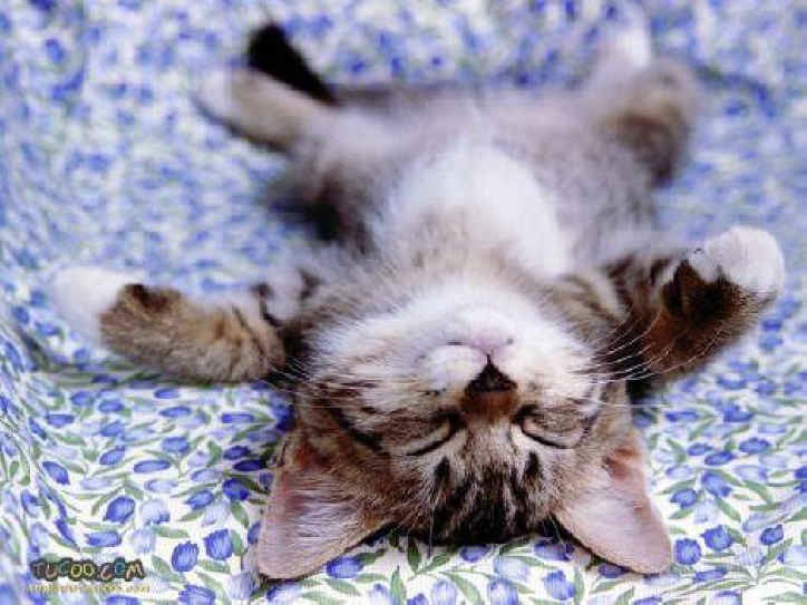 Sleepy Kitty - Cats Photo (153784) - Fanpop