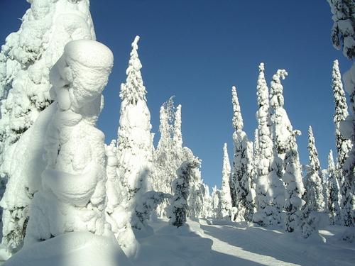 Snow-covered trees in Kuusamo