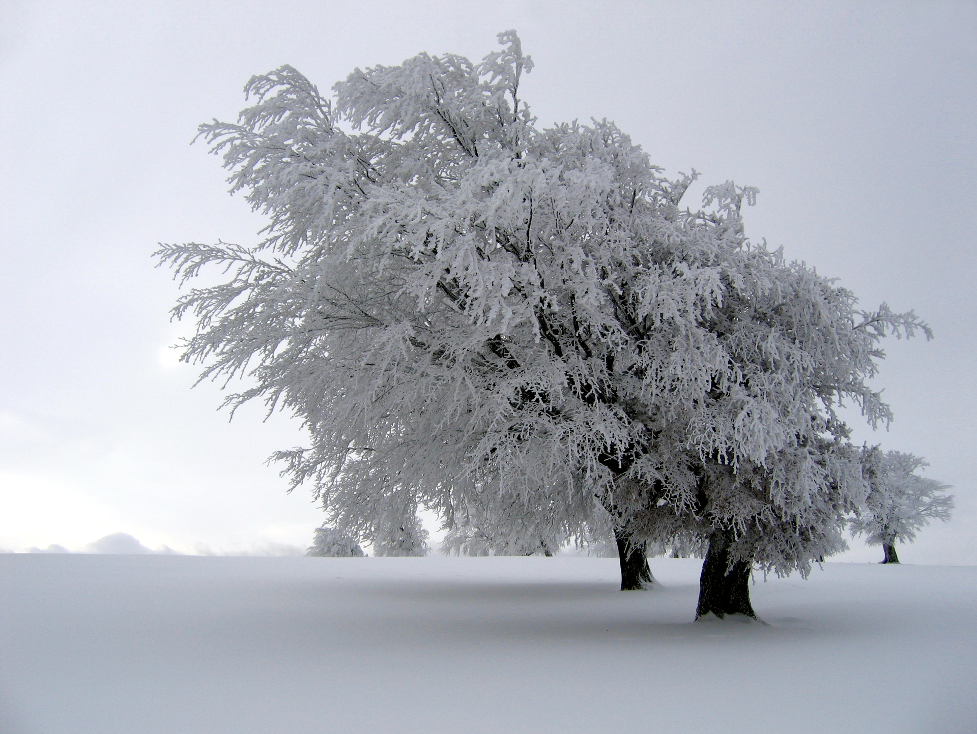 winter and snow trees - photo #2