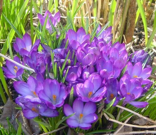 Spring Blumen