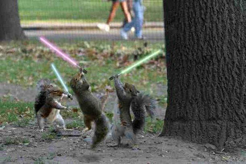 Squirrel's with Lightsabers