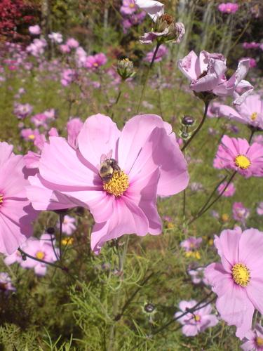 Summer 꽃