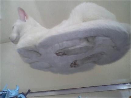 mesa, tabela Cat