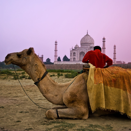 Taj Mahal - india Photo