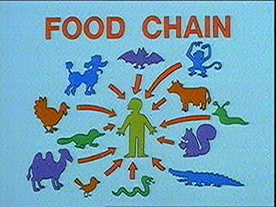 food wallpaper entitled The food Chain
