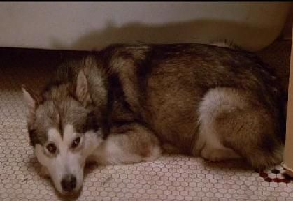 The Lost Boys Movie fond d'écran entitled Nanook