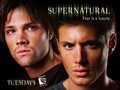 The Winchesters - the-winchesters wallpaper