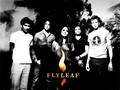 The band - flyleaf wallpaper