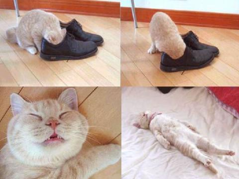 These Shoes Stink!