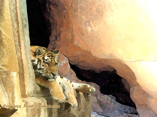 Tiger in the Rocks (1)