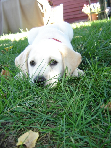 Titus - Ironman's puppy