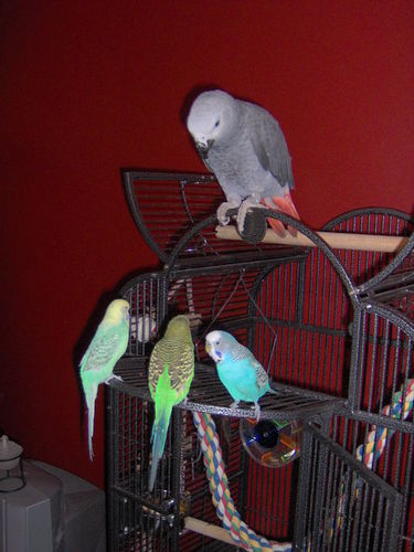 Tobbi and our other parrots