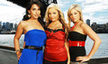 Trisha, Parisa, Shauvon - the-real-world photo