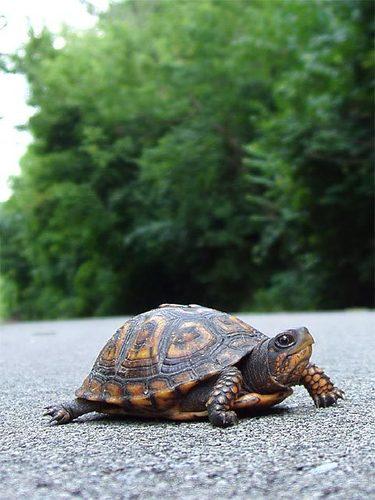 Turtles wallpaper titled Turtles