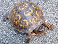 Turtles - turtles photo