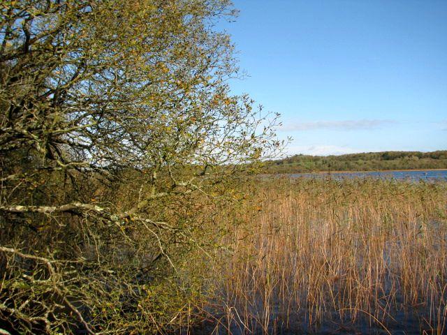 papar along the River Shannon