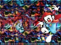 Wakko's Layout - animaniacs wallpaper