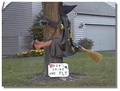 Watch Out For That Tree! - picks photo