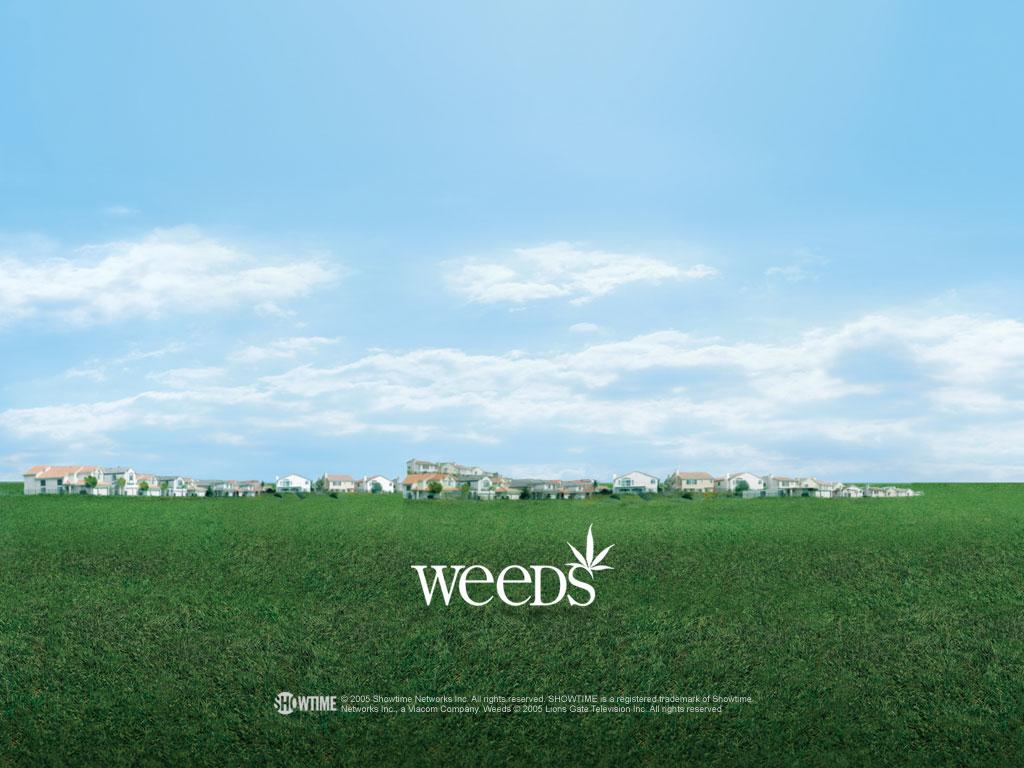 Weeds - Weeds Wallpaper (271309) - Fanpop