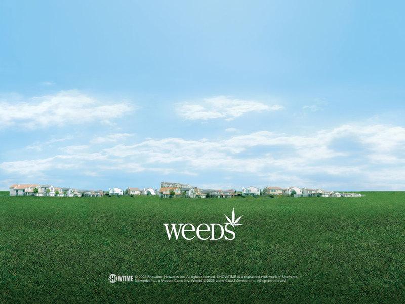 weeds wallpaper. Weeds - Weeds Wallpaper