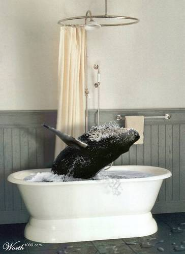 ballena in the ducha, ducha de