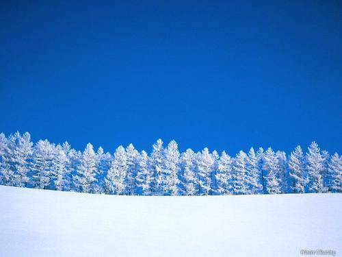 Winter wallpaper called Winter Trees