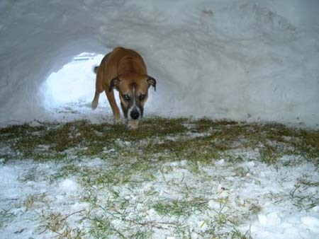 Dog in snow cave