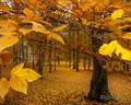 Yellow Leaves - autumn wallpaper