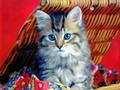 cats - aww... wallpaper
