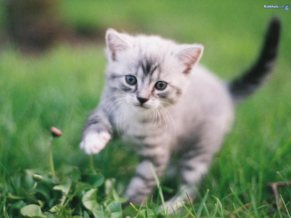 Cats aww