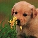 awww.... - dogs icon