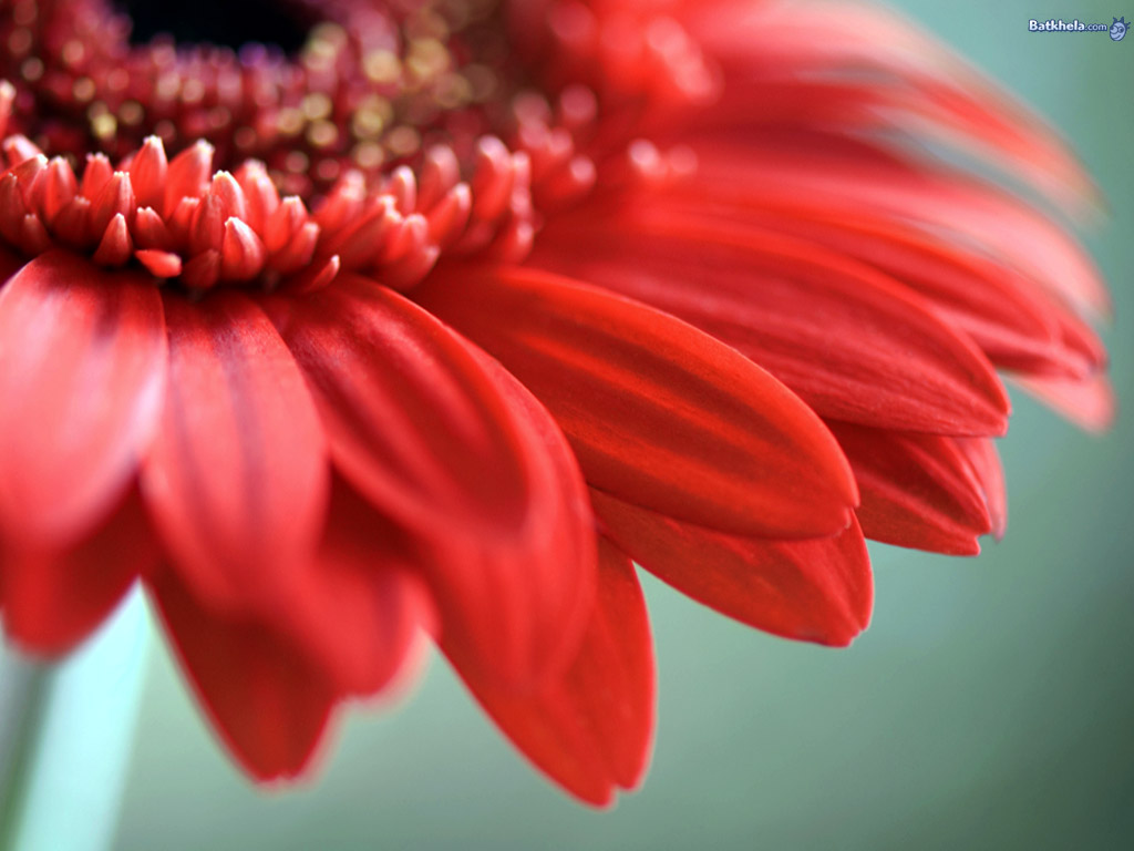 Beautiful flowers wallpaper 247920 fanpop Beautiful flowers images