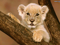 big cats - the-animal-kingdom wallpaper