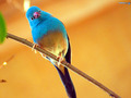 birds - the-animal-kingdom wallpaper