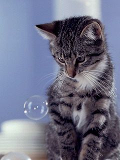 cat watching bubble